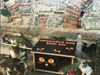 Adore - Kedi Evi Projesi